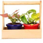 Wooden Planter with 2 Ceramic Pots (Red & Blue)